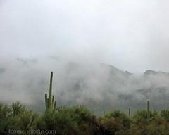 Fog and Cactus, Pima County, Arizona