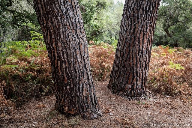 El dia que todos los árboles se pongan de pie... LA UTOPÍA DEL DÍA A DÍA SE HARA REALIDAD