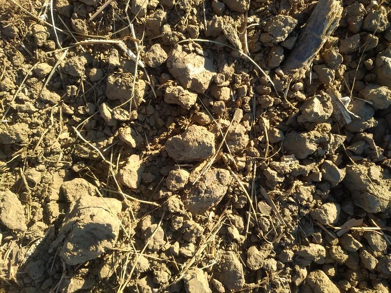Ground texture #09