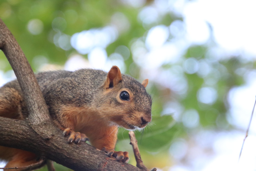 Squirrels in Ann Arbor at the University of Michigan - October 9th, 2018