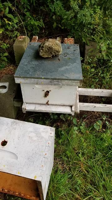 New hive body/frames