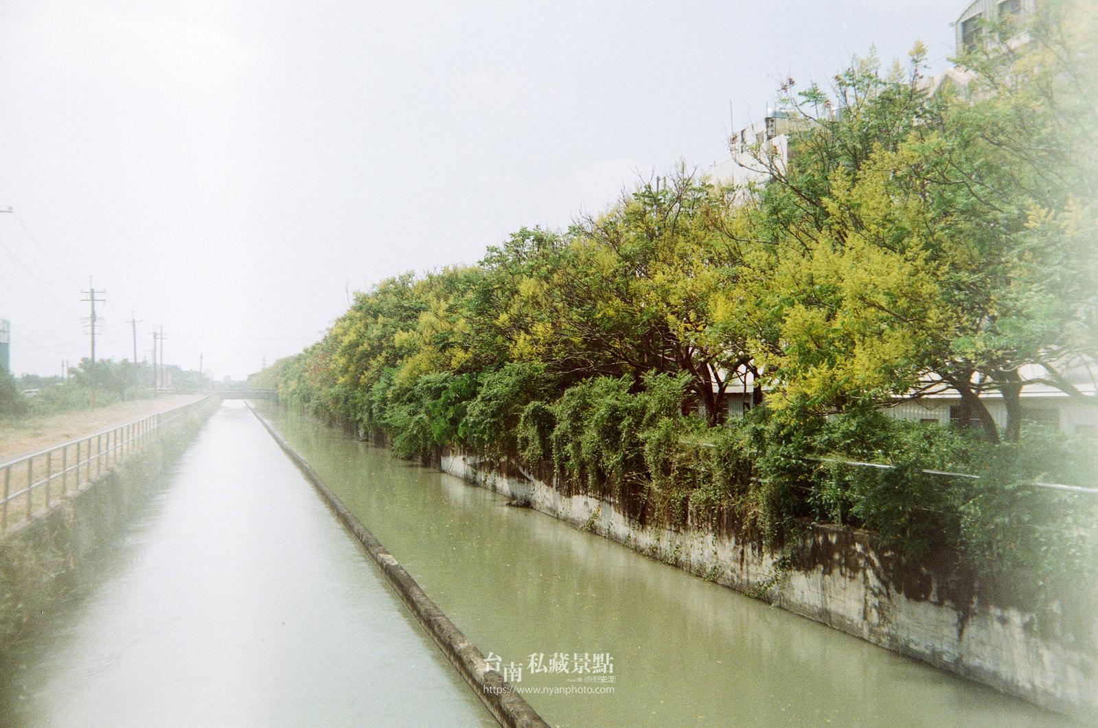 台南台灣欒樹23