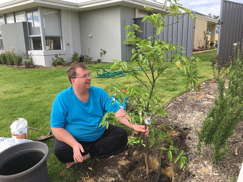 Mike Transplanting His Grapefruit Tree from Perth