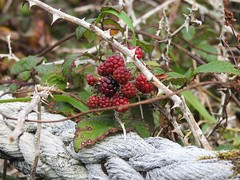 Encroaching nature DSCN1499