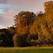 Ashridge Sunrise