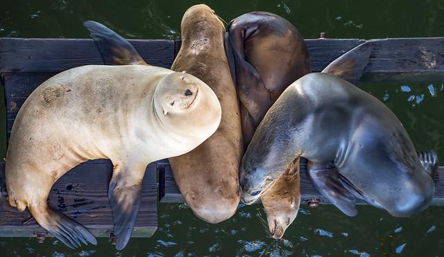 Sea Lion sisters, Santa Cruz, CA