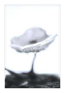 Blurred mushroom