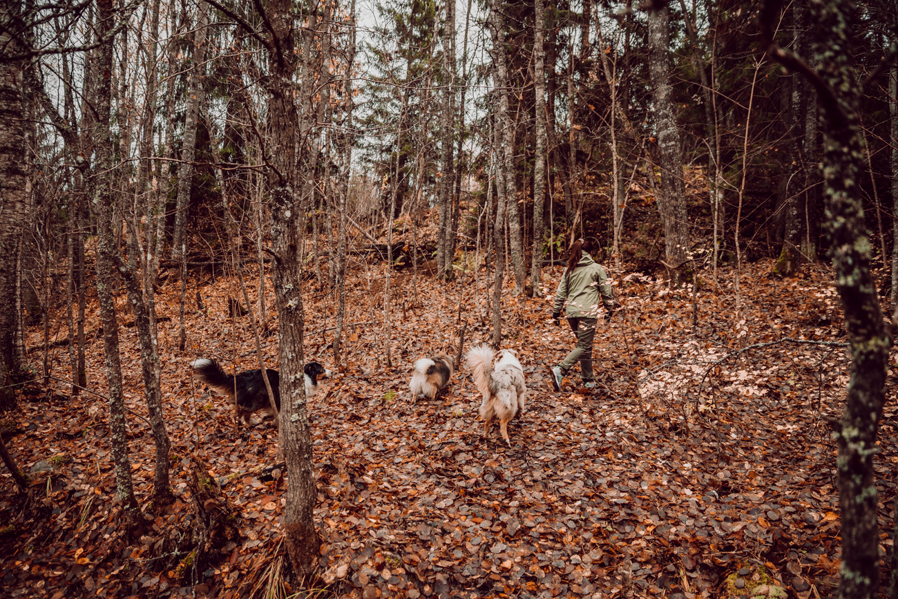 Östersundomin koirametsä-1