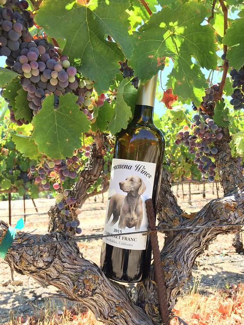Dracaena Wines Cabernet Franc, Paso Robles, CA