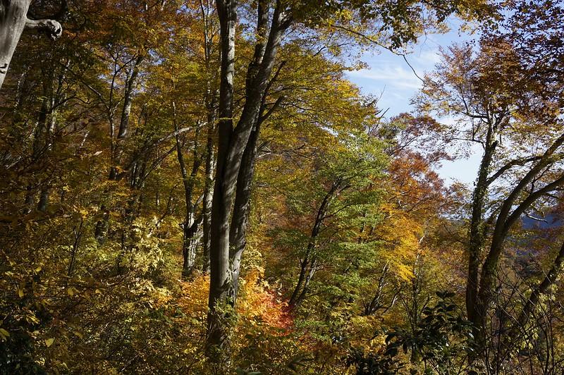 Foliage in Satoyama