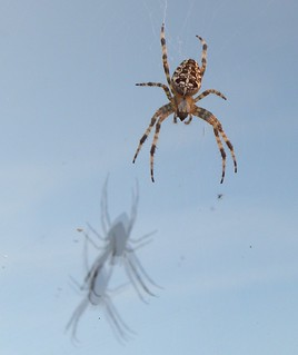Reflections of a spider