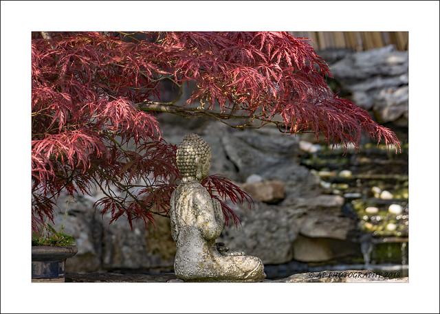Budda,s Tree