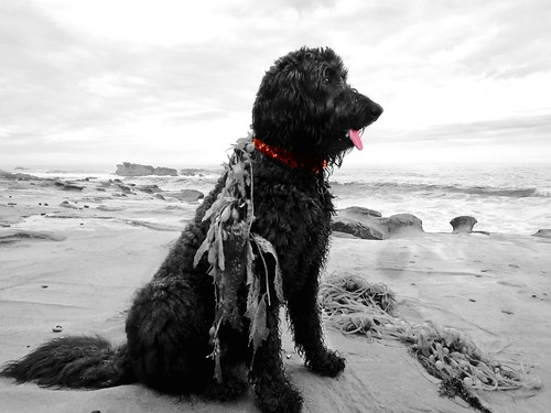 Benni, the Sea Dog