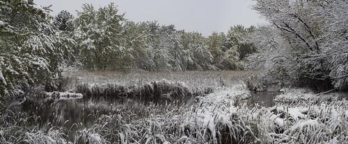 The marshes at Sertoma Park
