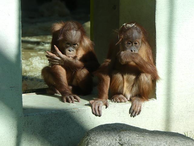 Quinn und Quentin, Tierpark Hellabrunn