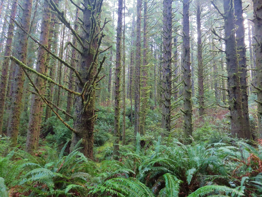 Siuslaw forest along the Siltcoos Lake Trail