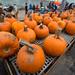 pumpkin-farm_30.10.2014_1401