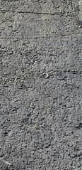 Ammonites (Coroniceras multicostatum) - Dalle aux Ammonites (Digne-les-Bains, Francia) - 05