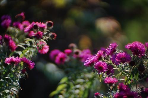 autumn in the garden #2
