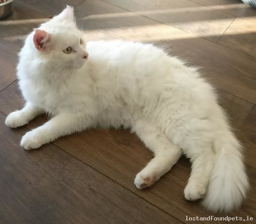 Sat, Sep 1st, 2018 Found Male Cat - Valleymount, Blessington, Wicklow