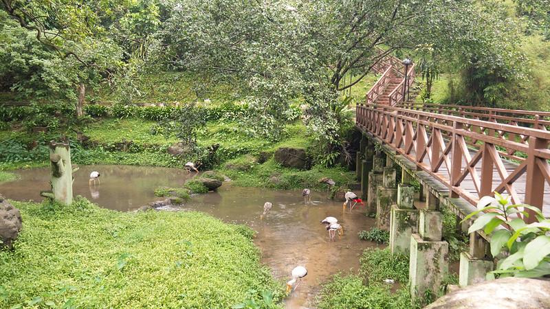 Bridge cross the River, KL Bird Park, Kuala Lumpur, Malaysia