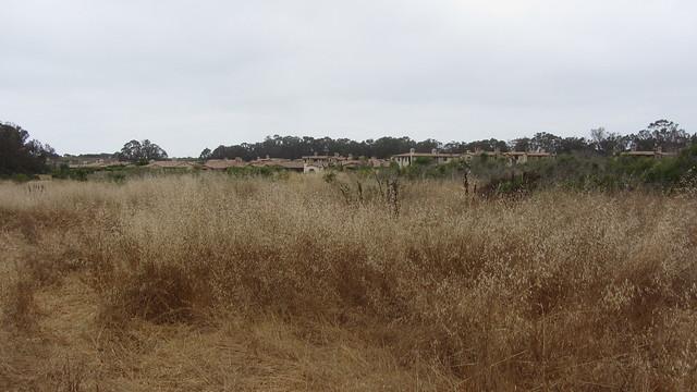 IMG_4845 Ellwood Sperling The Bluffs across dry grass field