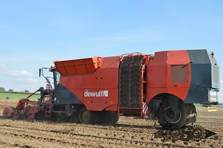 Dewulf Kwatro-055