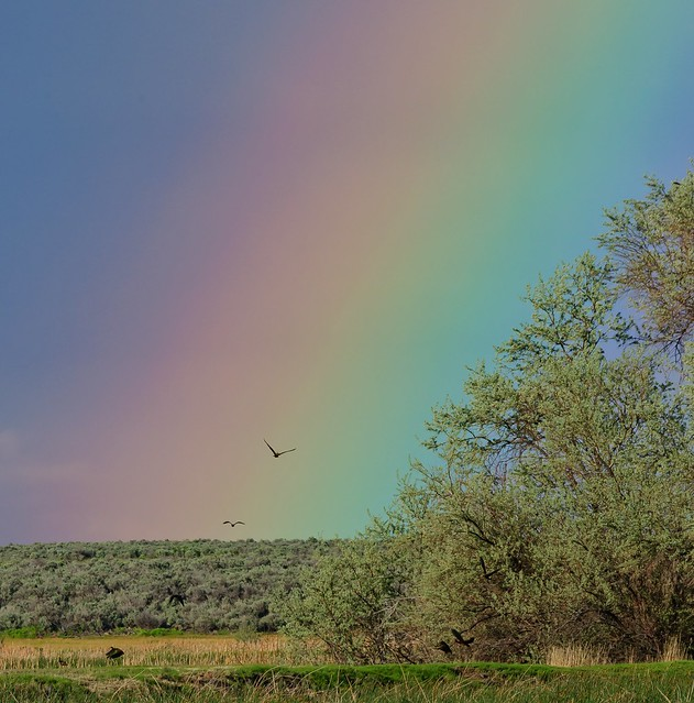 Rainbow at the marsh 6849