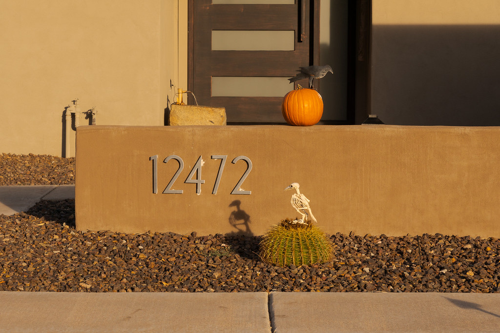 Halloween decorations of a bird on a pumpkin and a skeleton bird on a cactus in the Buenavante neighborhood of Scottsdale, Arizona