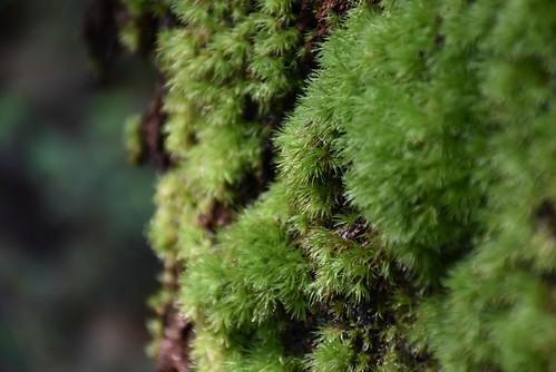 幼坑古道-蕨類