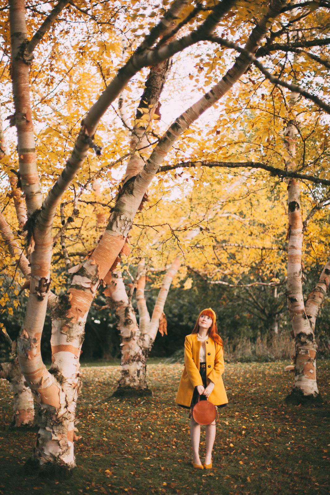 birch trees-1