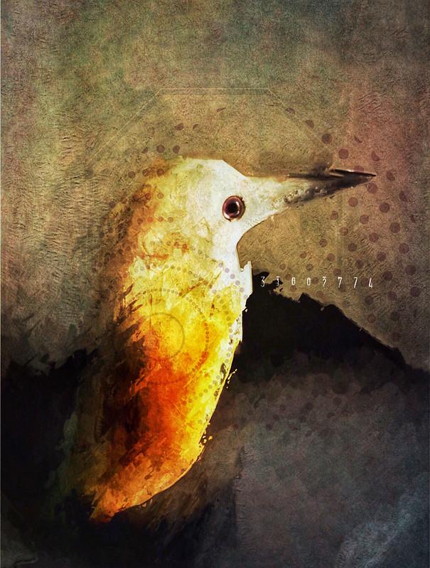 IMG_0636-bird-final-w