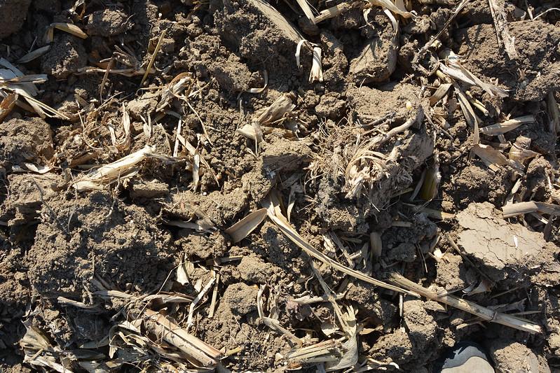 Brown Ground Texture #06