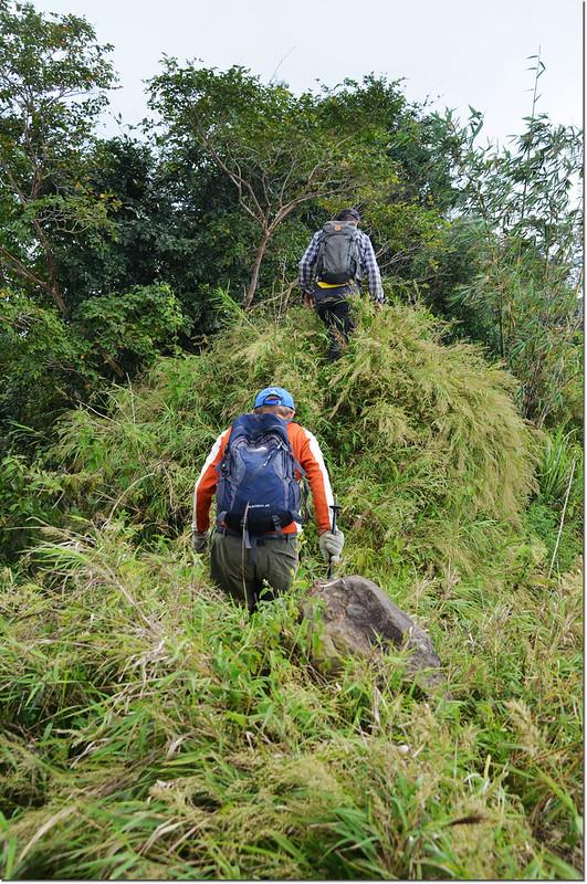 小林山登山步道矮箭竹瘦稜段