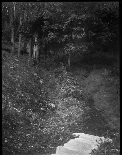 steps lookingdown stone pathway path trail forest woods westasheville northcarolina zenobia kodak tmax 400 kodaktmax400 kodaktmaxdeveloper 120 120film mediumformat monochrome monochromatic blackandwhite 6x45 landscape park