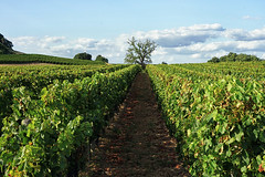 Fronsac, Bordeaux - Photo of Galgon