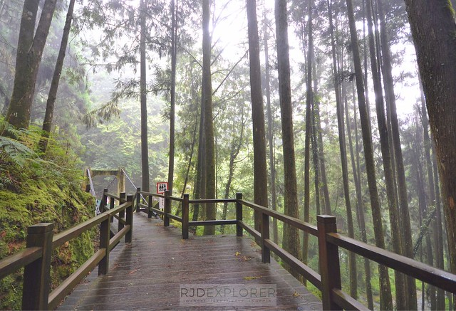 alishan forest tour Alishan Forest Recreational Park