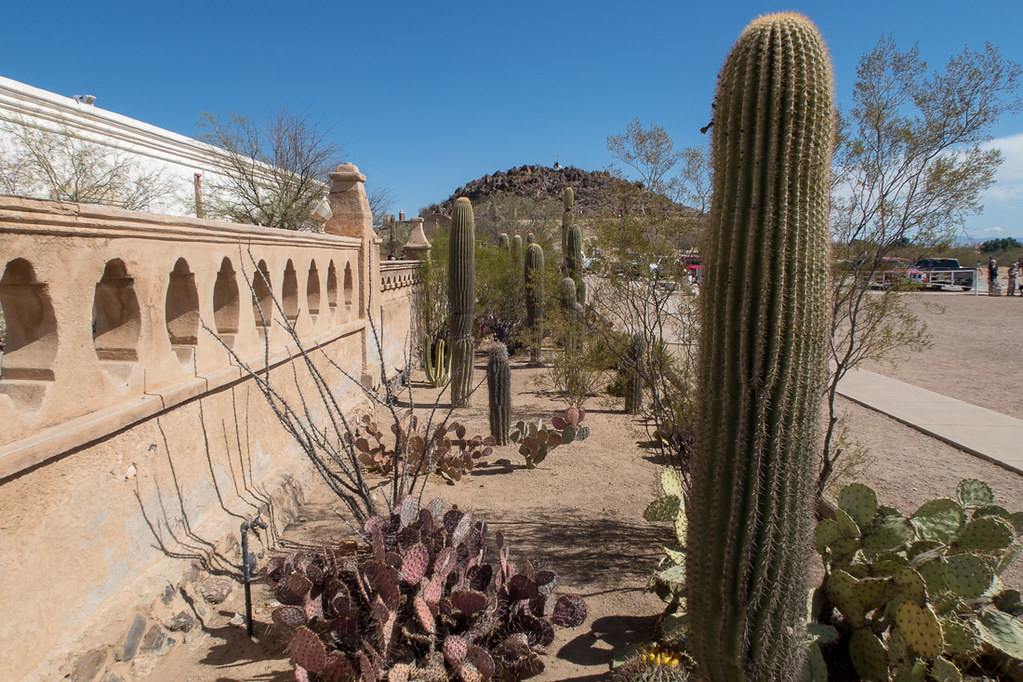 Cactus and landscaping at Mission San Xavier