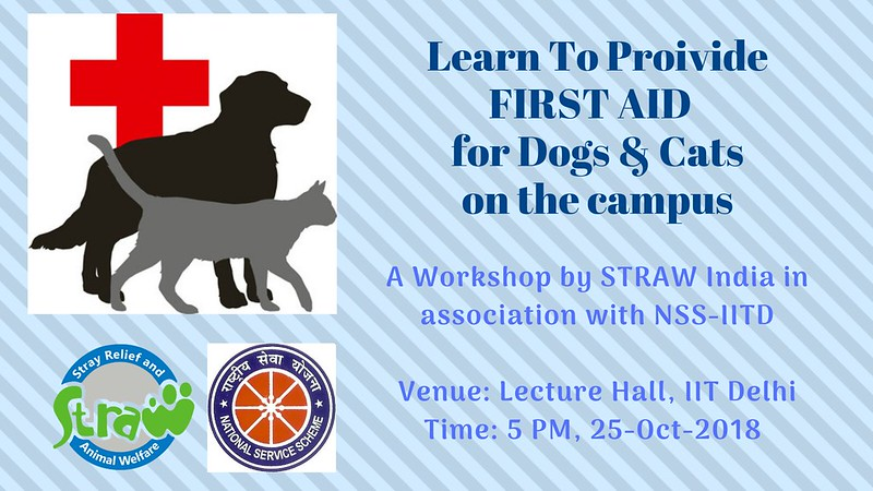 First Aid for Campus Cats & Dogs at IIT-Delhi