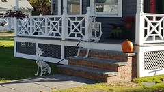 Just a skeleton on a porch with his dog