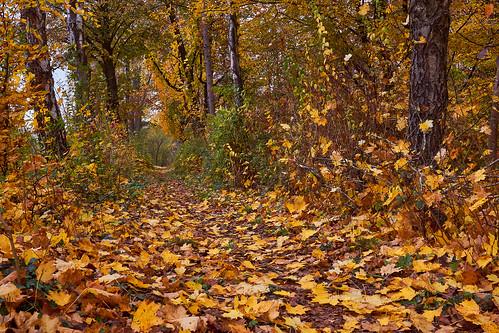 Blätterweg - Path full of leaves