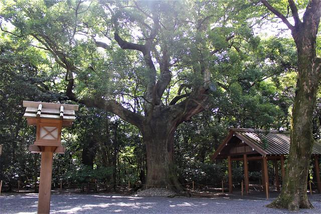 tsukiyominomiya018