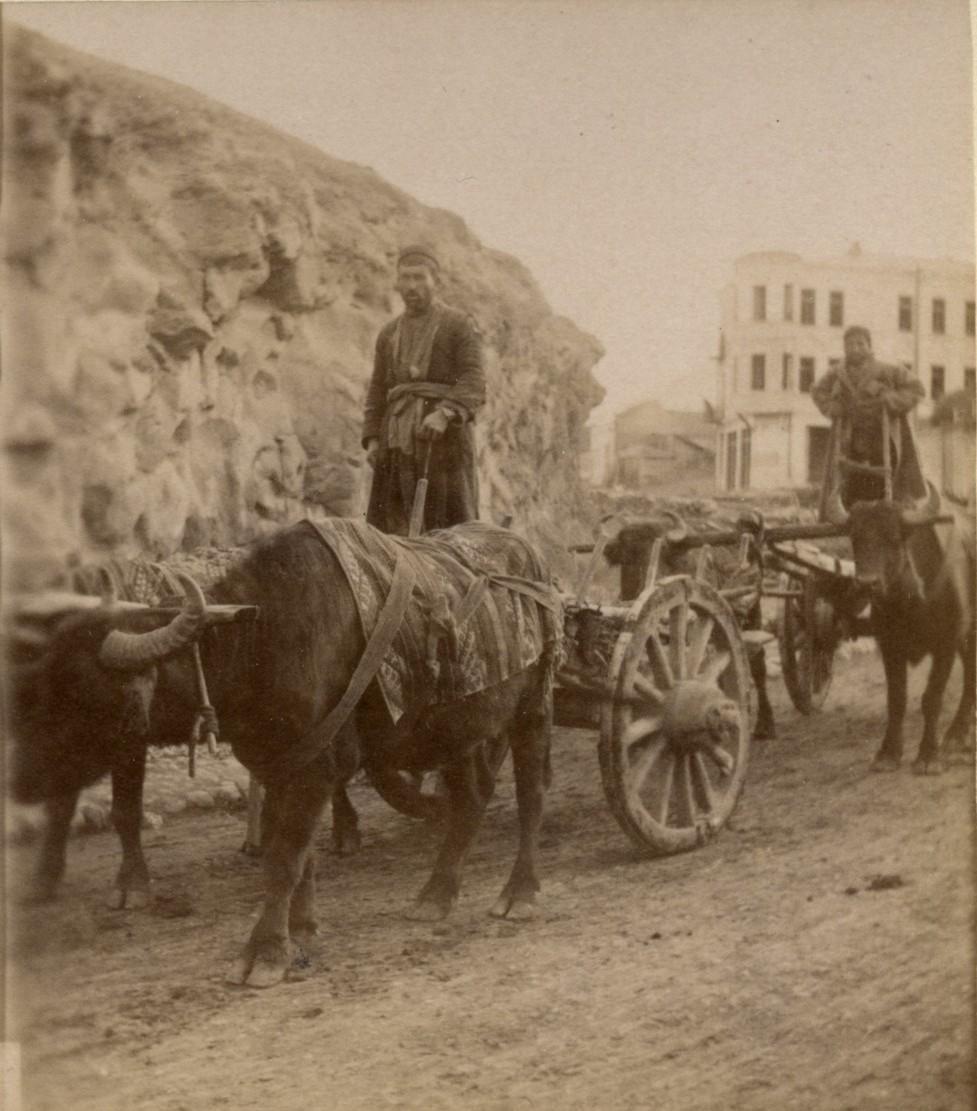 Грузинская арба в упряжке буйволов