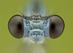 dragonflies 作者 thengoctran19