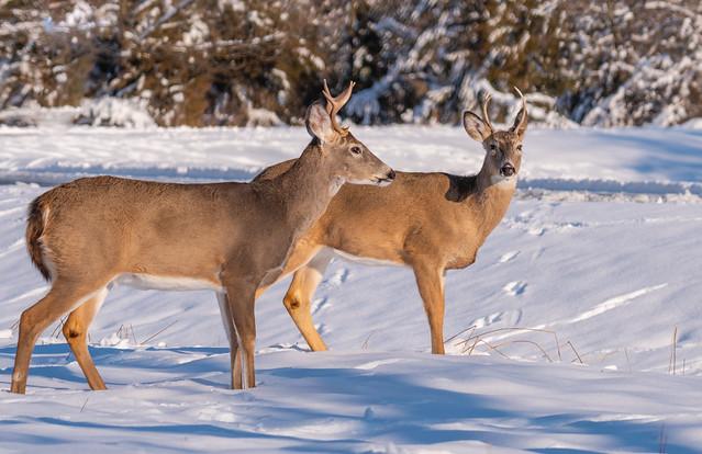 Snow Day..., Nikon D500, Sigma Macro 50mm F2.8 EX DG