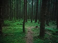 Røtter og trangt - Prestegårdsskogen