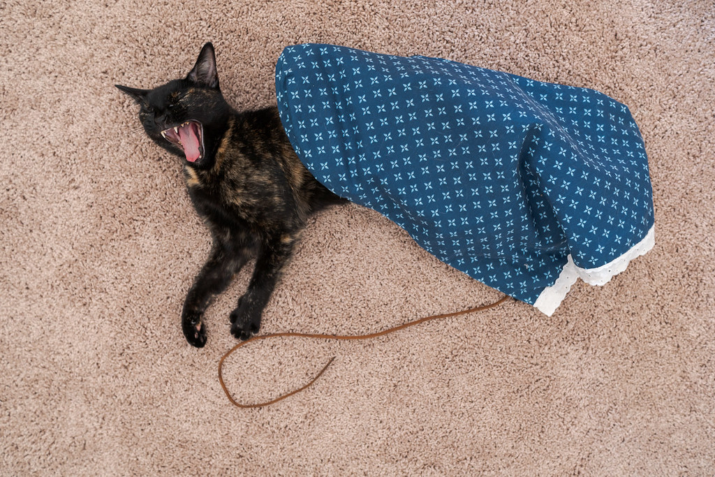Our cat Trixie yanws while sleeping on the carpet underneath the crinkle bag and next to one of her shoestrings