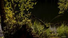 2018 09 29 Lac de la Maix-752371 - Photo of Grandfontaine