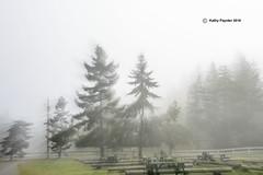 Tree - Lens zoom 7448