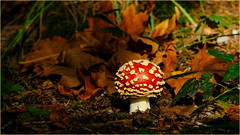 red mushroom caught in sunbeam